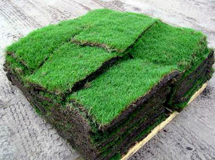 St augustine grass plugs and pallets